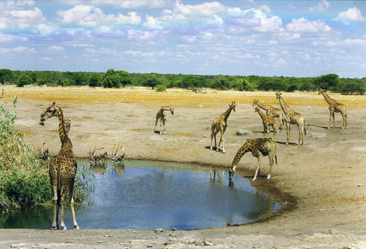 Quelques lieux à ne pas manquer pendant une échappée en Namibie