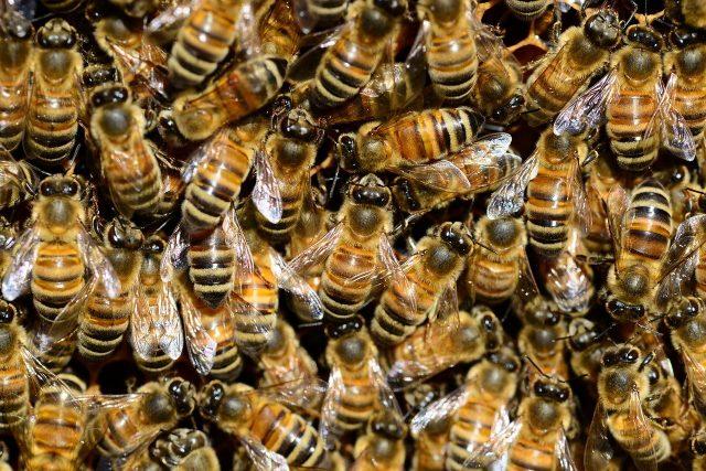 Trouver le prix désinsectisation à Montpellier pour éliminer les insectes